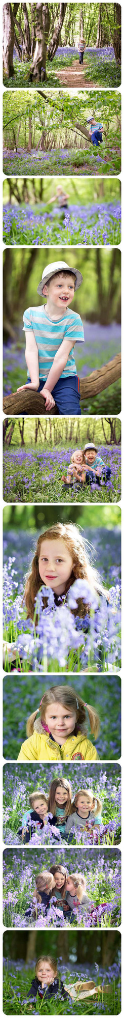 hotos of children in the bluebells in Heartwood Forest just outside of St Albans