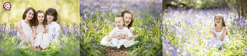 bluebell photographs