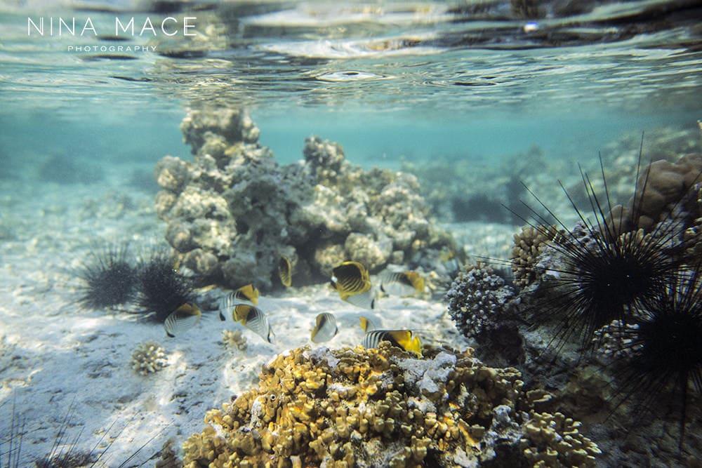 under water camera kit