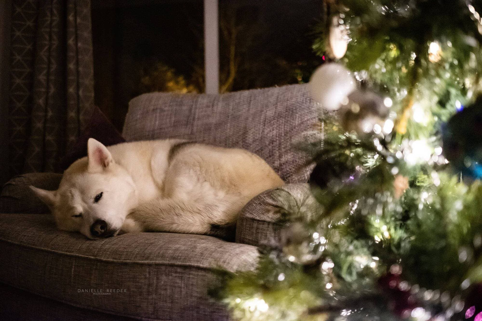 Top Tips For Photographing Around The Christmas Tree