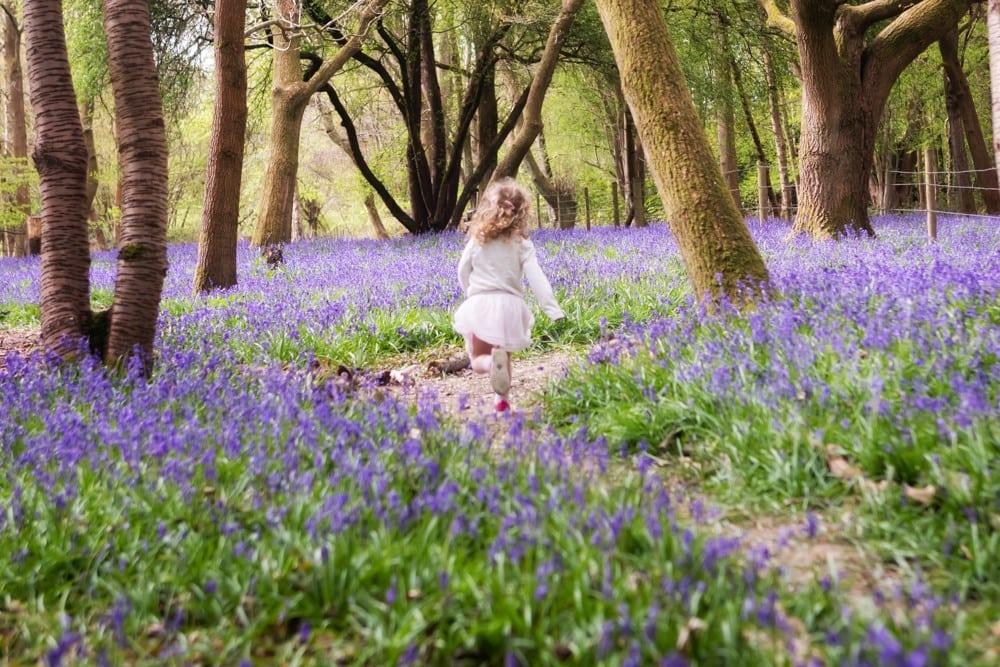 little girl running in bluebells in Beaconsfield